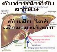 สมุนไพรรักษาโรค ลดหน้าท้อง เบาหวาน